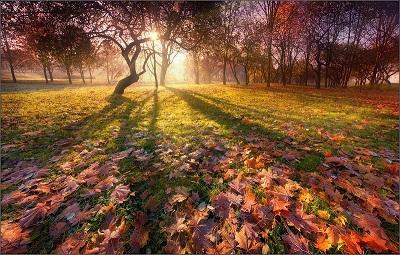 Буйнов Александр. Падают листья